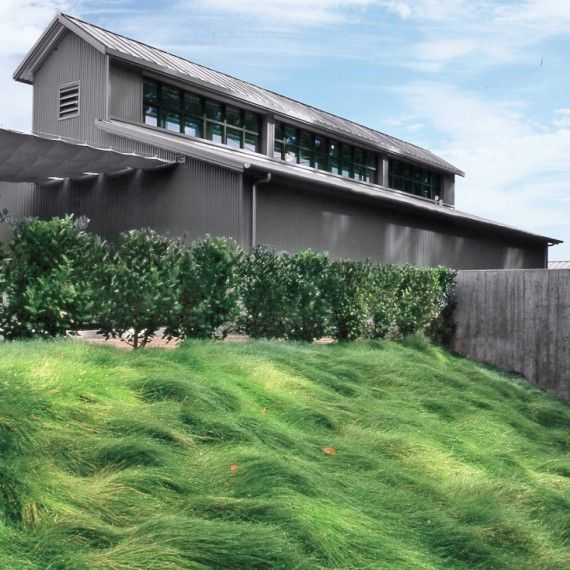 This creeping red-fescue lawn prevents erosion on a steep hill.