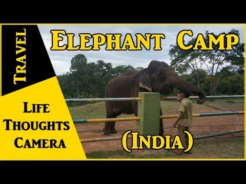 My Experience at the Elephant Camp in Theppakkadu, Tamil Nadu (India)…