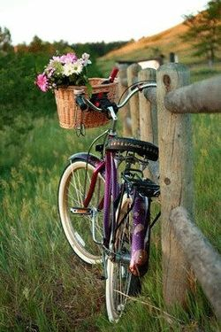 Lovely purple bike and scenery