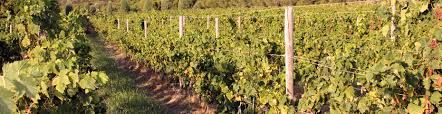 #tabarka #winery #south #sardinia
