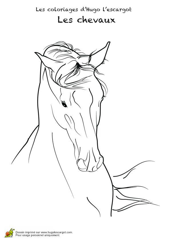 Les 191 meilleures images du tableau coloriages animaux de - Dessin tete de cheval ...