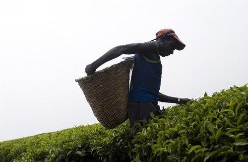 Fairtrade te