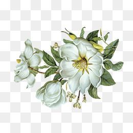 Pin By Dayliana Soto On Collages Pinterest White Flowers Flower