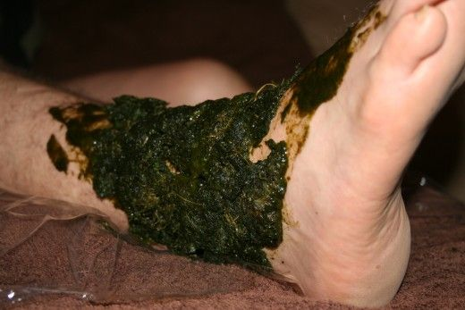 First I rub some juice into his leg, then I mix the pulp with the remaining juice and 'plaster' it on thickly. Note the plastic kitchen wrap beneath his ankle ... and the towel beneath that. A comfrey poultice can be messy, :)