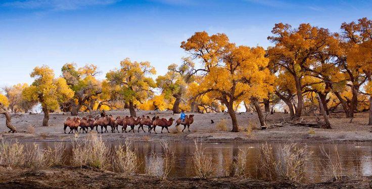 En la región de Mongolia Interior, y más concretamente en Ejinaqi, se encuentran las mayores extensi... - Corbis. Texto: Redacción Traveler