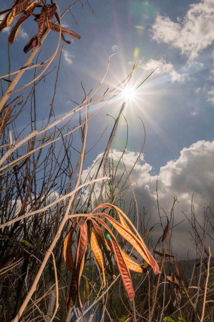 Unique à La Réunion l'éclipse annulaire du soleil
