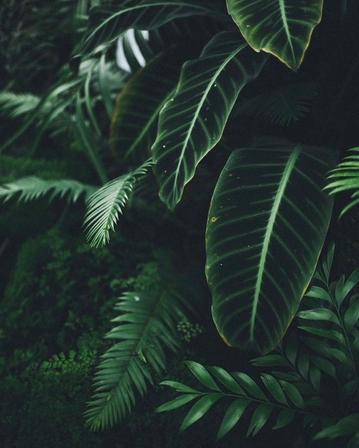 welcome to the jungle | Pinterest: @chenebessenger