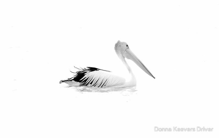Black and White by Donna Keevers Driver