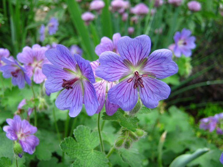 Best Pleasing Plants Images On Pinterest More Photos