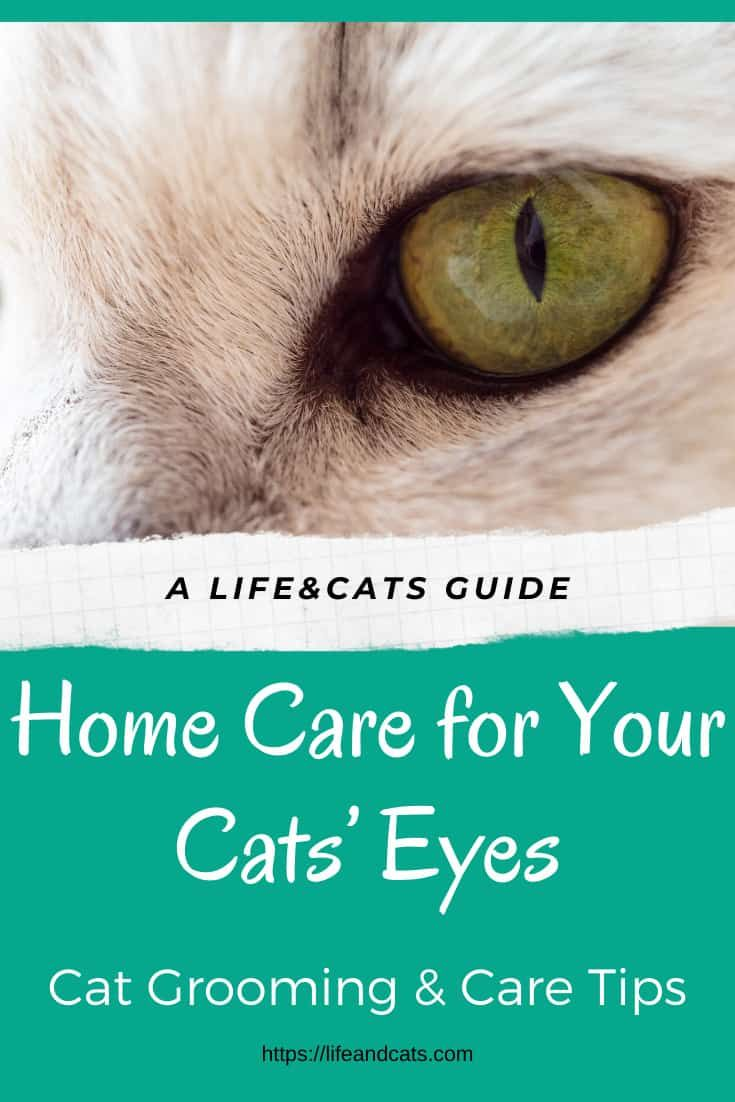 Keep Your Cat S Beautiful Eyes Clean And Healthy Life Cats In 2020 Cat Eye Problems Cat Eye Infection Watery Eyes