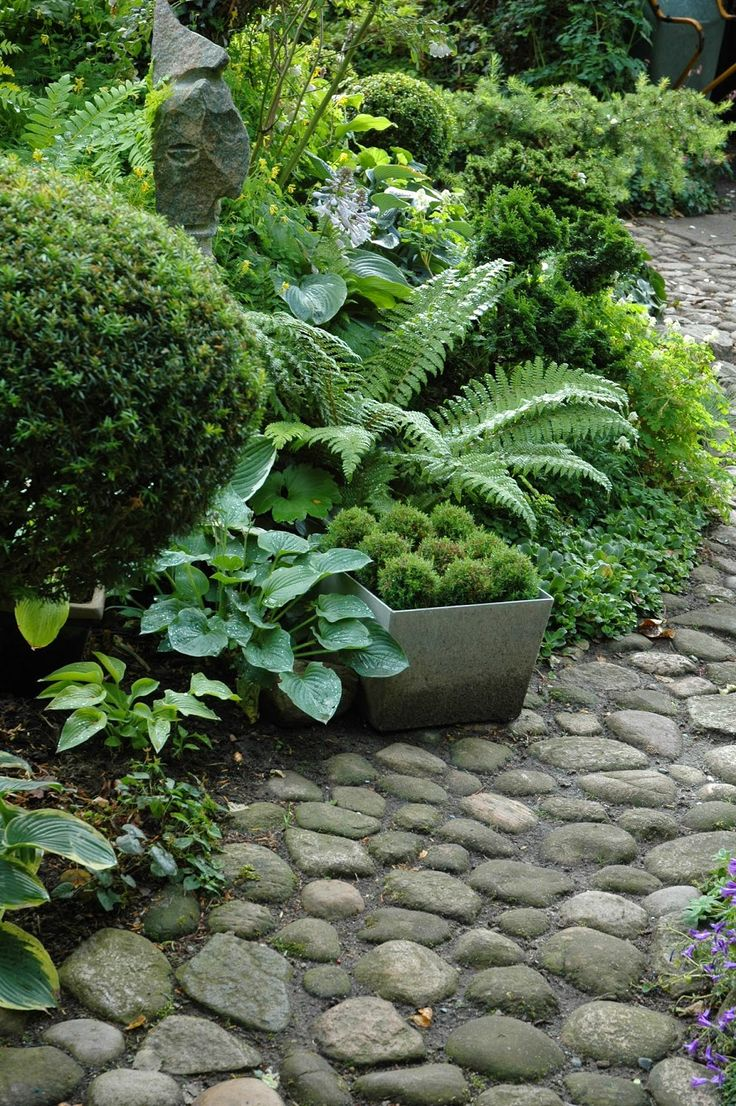 hosta, boxwood and fern bordering a rock path
