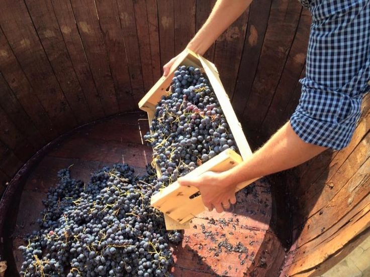 Immerse yourself in one of the world's oldest traditions. Take a tour of a Provençal farm, learn how grapes are cultivated and how wine is made with Tourboks.