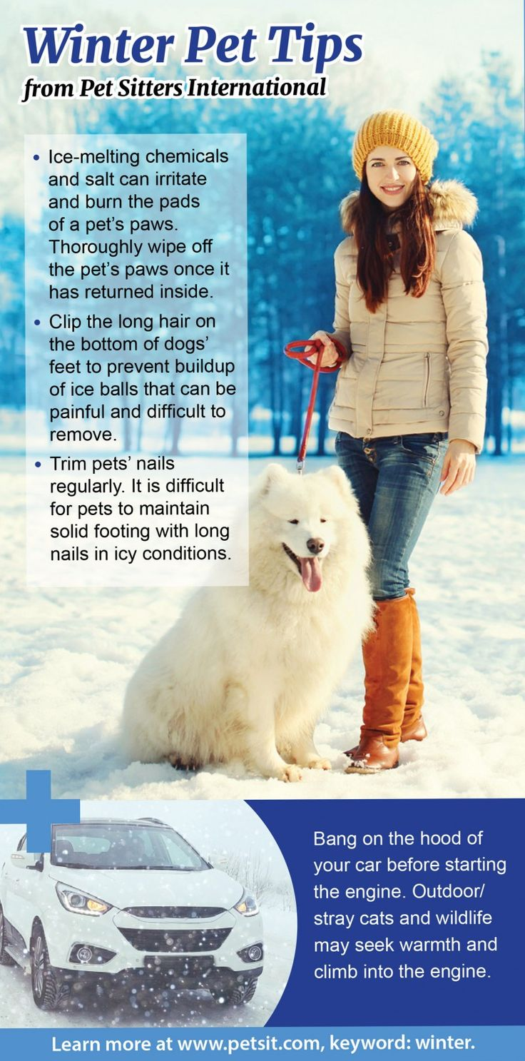 Winter pet safety tips | Holiday foods hazardous for pets