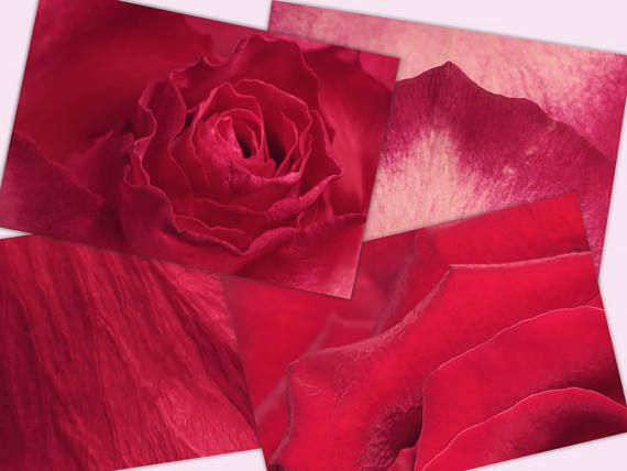 Roses digital paper packroses textures digital background