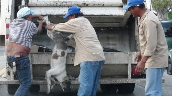 Cleaning workers in Oaxaca, Mexico crushed dog alive. Still alive a puppy was crushed by the hydraulic jack of garbage truck Salina Township. Salina Cruz, Oaxaca., On April 8, 2013: - Three subjects were involved in the killing of the man's best friend, putting it in the jaws of a garbage truck, being crushed when he was alive. The three murderers were identified dog one collectors of the H. City of Salina Cruz.  SEND THEM TO JAIL FOR MURDER!