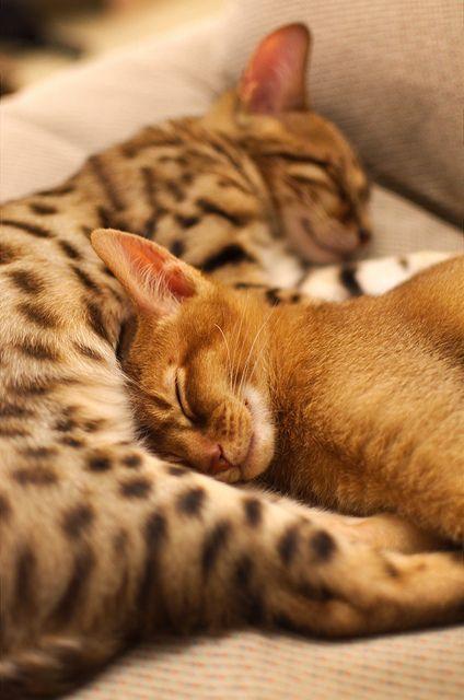 Nap Time | Flickr - Photo Sharing!