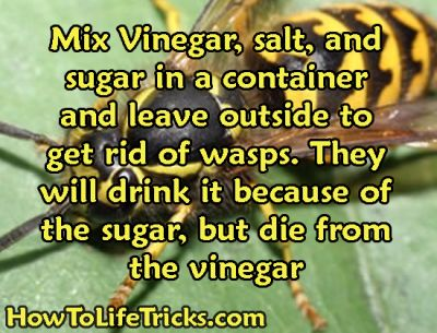 How to get rid of wasps this summer! Mix vinegar, salt, and sugar in a container and leave it outside for the wasps to eat. They will be attracted to it because of the sugar, but the vinegar and salt will kill them