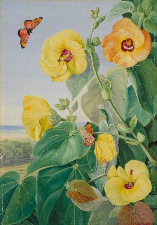 A Tree of the Sea-Shore, St John's River, Kaffraria by Marianne North  1882