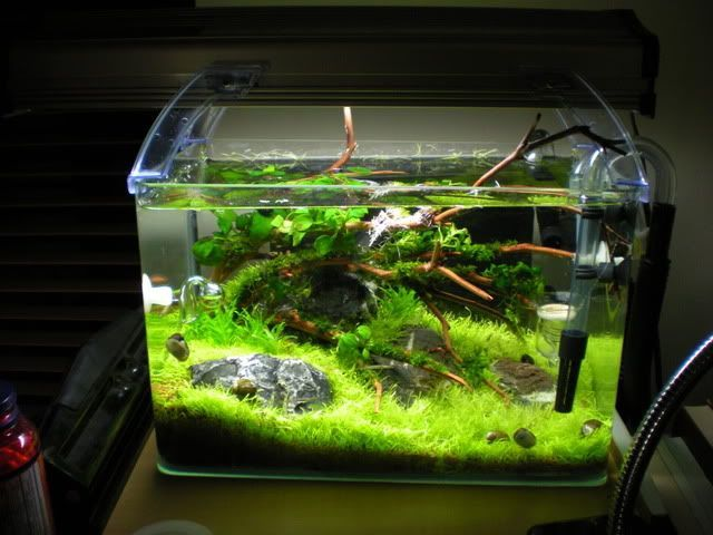 Image result for aquascape 5 gallon tank | Fish tank, Aquascape ...