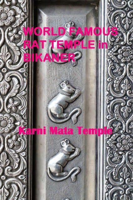 World Famous Rat Temple. Karni Mata Temple in Bikaner