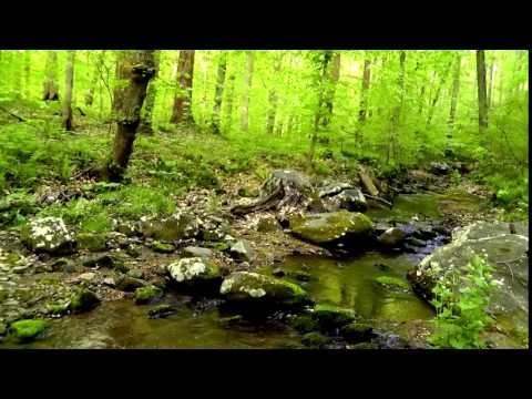 Упражнение Лесной Ручей (Полезно Если Вы Ищете Радость Жизни)