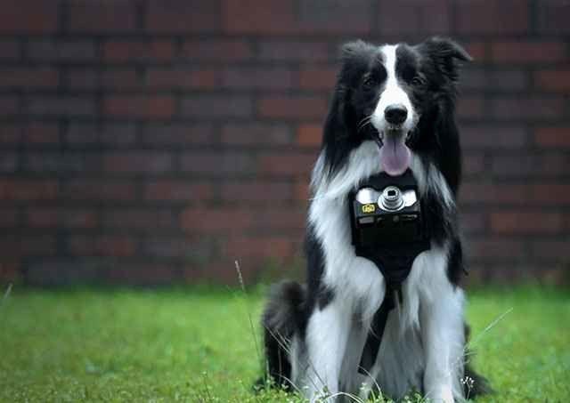 Grizzler, il primo cane fotografo pioniere della Heartography [Video + Immagini]
