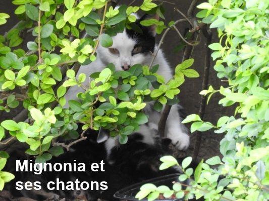 Cliquez sur la photo pour que l'association puisse avoir de la nourriture pour les chats errants...