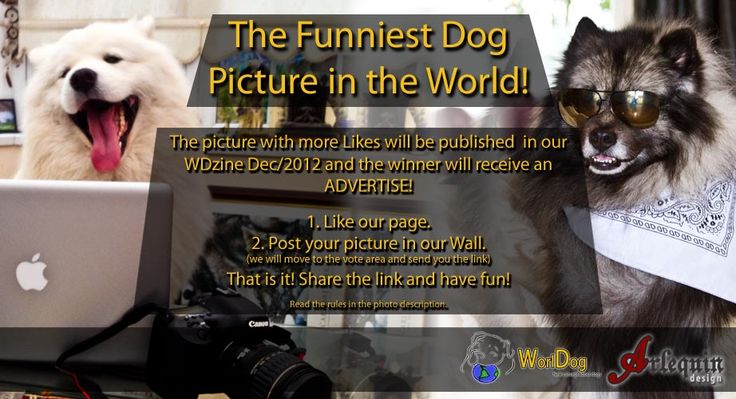 Hello everyone,    WorlDog lauched a Funny Contest! Share a picture of your best friend in a funny situation and show him or her to the World!    http://worldog.com/the-funniest-dog-picture-in-the-world