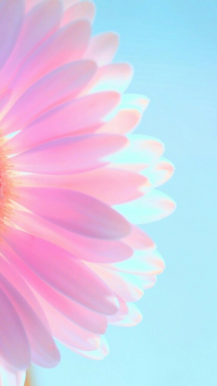 Blume Blume Pastel Iphone Wallpaper Flower Iphone Wallpaper Pink Wallpaper Iphone