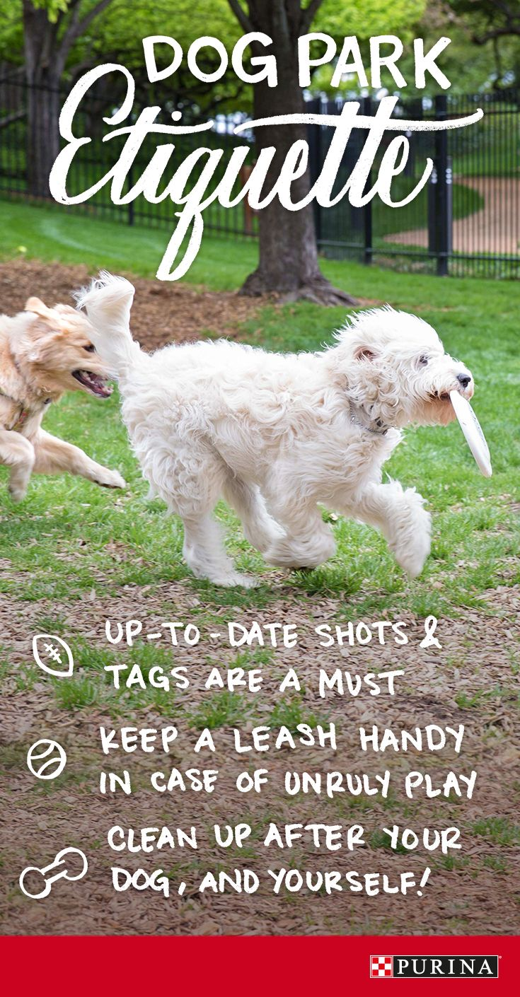 Dog park etiquette is an important part of your trips to the park! Follow these tips next time you and your dog head to the dog park to make sure everyone stays safe and has fun!