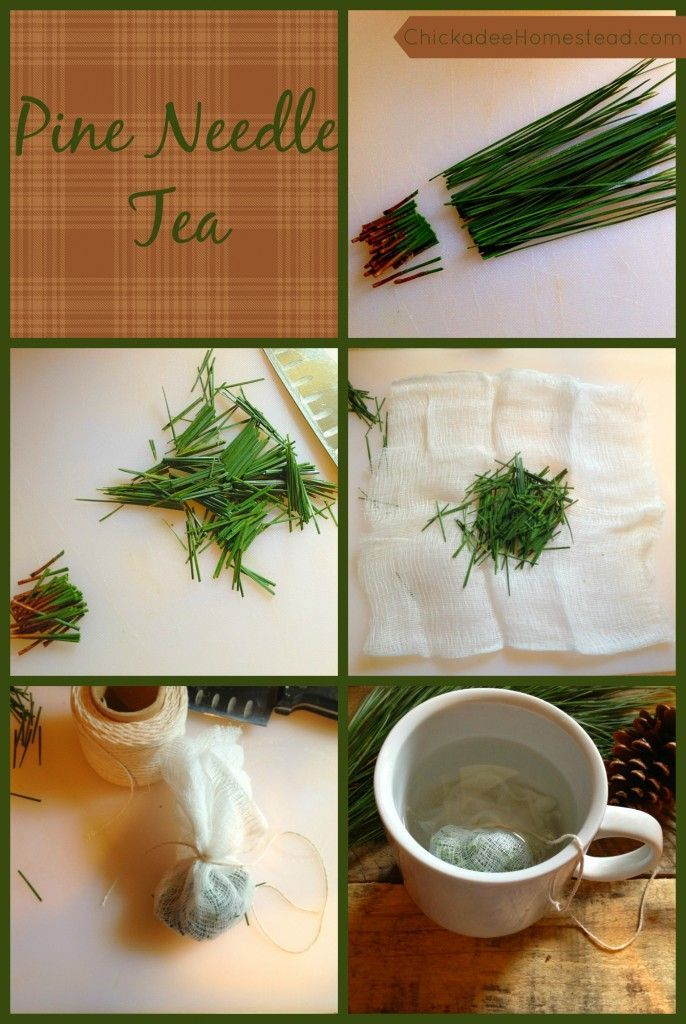 Pine Needle Survival Tea | Chickadee Homestead (.com) I've wanted to try this for years but I always chicken out because I think I'm gonna pick a poisonous tree.