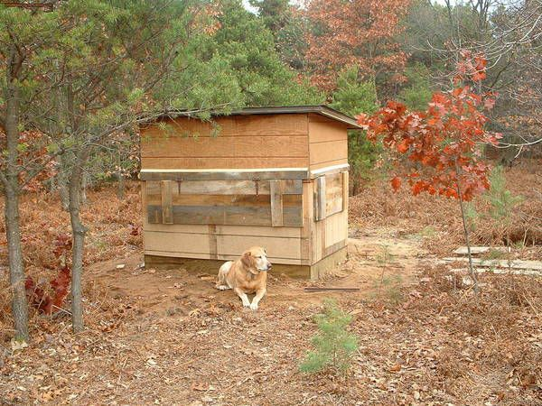 Deer blind ground google search deer hunting for Deer ground blind plans