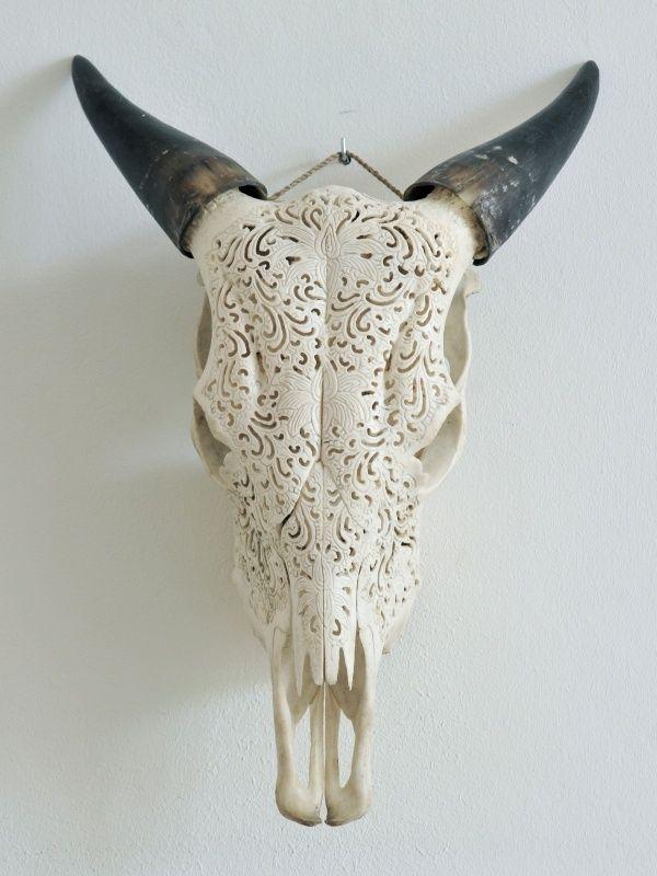 Koeienschedel Lotus