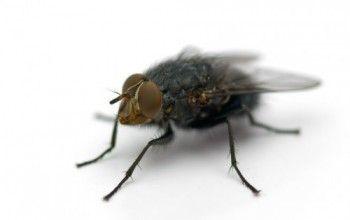 allontanare mosche e altri insetti- in un angolo una ciotola con pepe nero ed aceto. Il pepe nero può essere miscelato con zucchero e acqua, da spalmare su una striscia di carta e poi sul davanzale della finestra. fette di limone con chiodi di garofano nella polpa, o due fette di pomodoro per tenere lontane le mosche. aceto di vino bianco + menta ed eucalipto o bucce di limone da vaporizzare nelle stanze- oli o incensi : geranio, citronella, basilico, lavanda e menta.