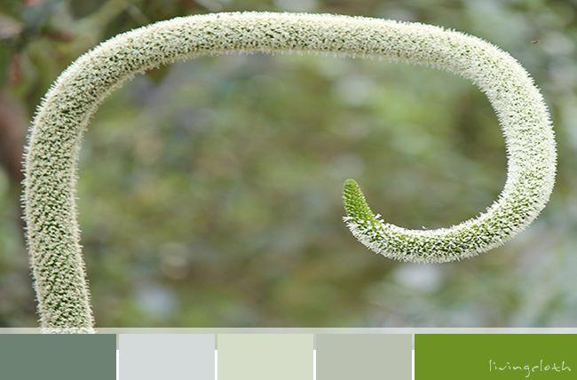 colour palette flowerspike