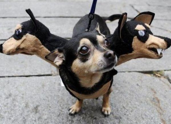 Beware of the three headed monster