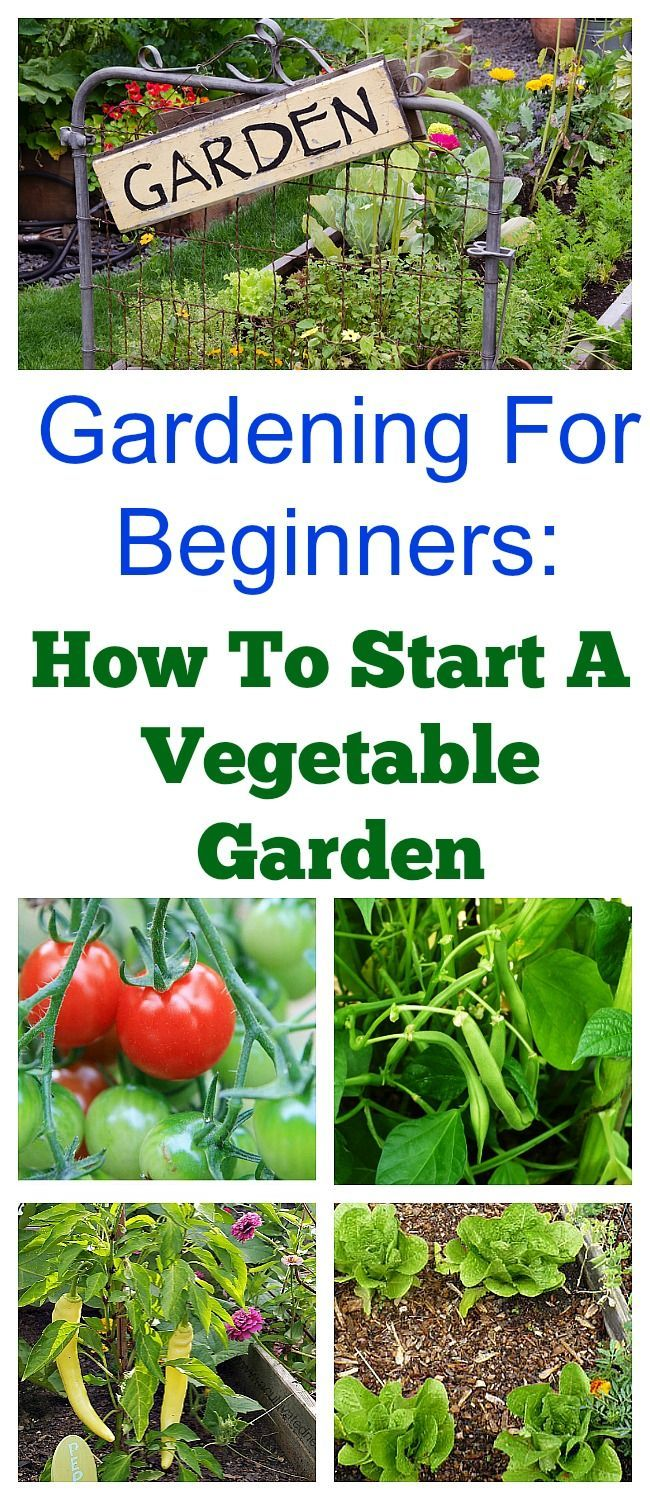 Would you like to have a vegetable garden this year? Here's a quick start guide to starting a spring vegetable garden that's great for beginners! If you would like more in-depth information about vegetable gardening, be sure to check out my Gardening 101 Series! #BackyardGarden