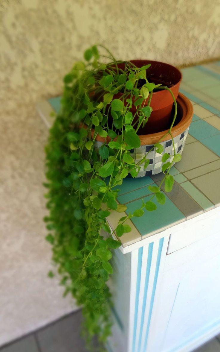 plante retombante | Plante tombante