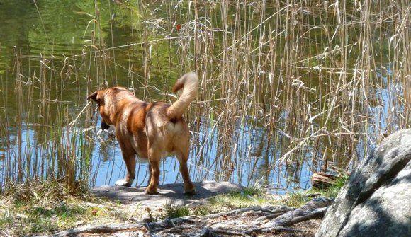 Hundefreundliche Hotels - Kaltern und Tramin - Kalterer See, Südtirol