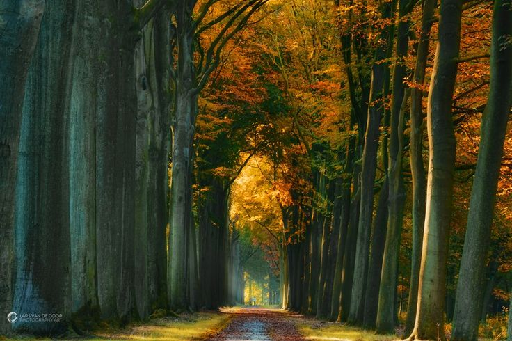 Forrest autumn