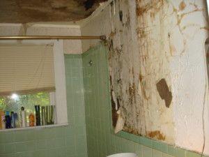 Mold In Bathroom Wall Health best 25+ mold in bathroom ideas on pinterest | clean shower mildew