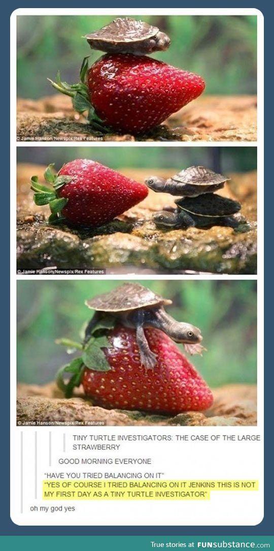 so so cute.