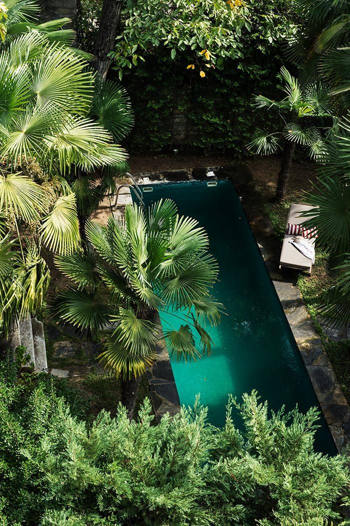 a hidden pool behind a garden of palm trees