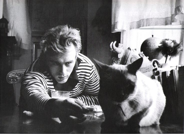 James Dean with Marcus, a Siamese cat who was a gift from Elizabeth Taylor