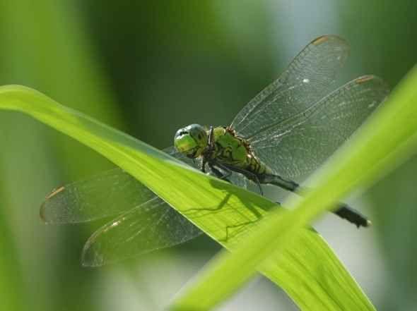Dragonfly photo by Jon Sullivan