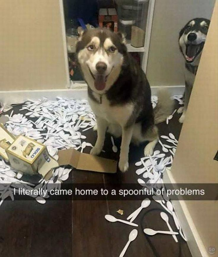 hahaha mine went through the photo album and tore pix in half and ran around the bedroom and tore up clothes. They are also escape artists...  ---->>>> Funny Animal Picture Dump Of The Day 28 Pics