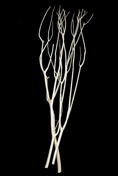 "Japanese Mitsumata 48"" Branches Bleached (3 branches-bundle) $5.99 bundle/ 3 bundles for $5.49 each"