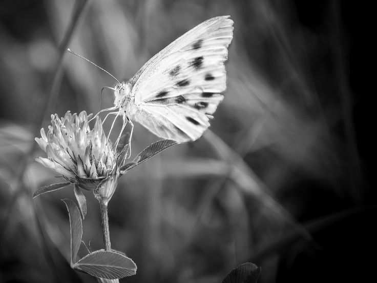 spotted butterfly by Ionut Vicol on 500px