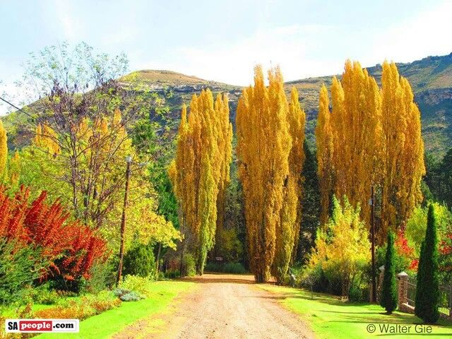 Autumn in Clarens, Free State