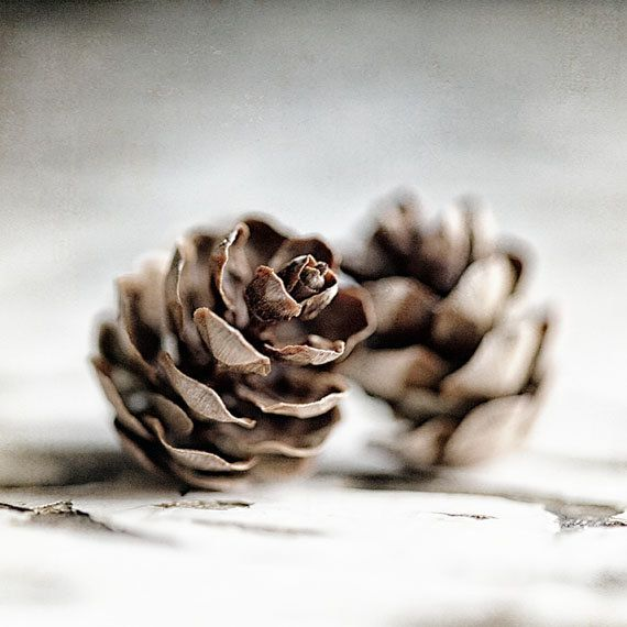 Nature Picture  Nature Photography  Pinecone  by LisaRussoFineArt, $25.00